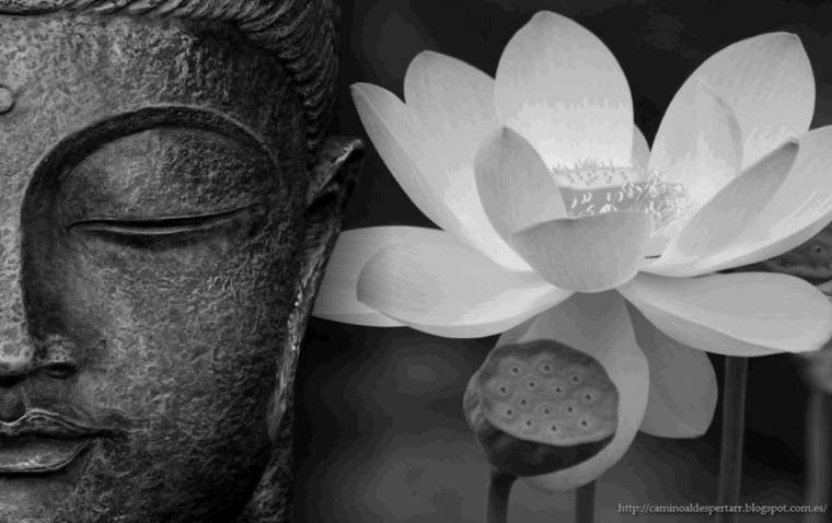 Buddha and Lotus 2